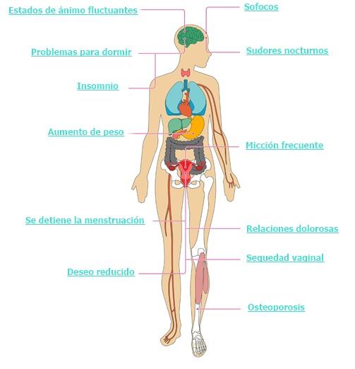 Efectos de la Menopausia en el cuerpo